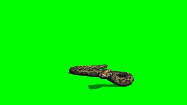 Snake Pythonu procházení