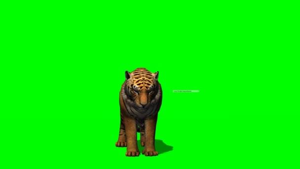 Tigris megeszi zöld képernyő