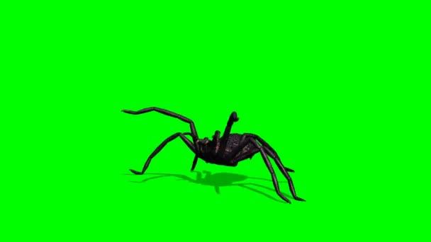Nagy pók agresszív