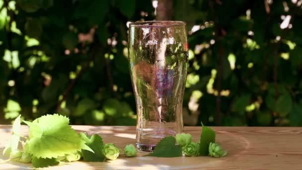 nalil sklenici piva s chmelem, jet, pěna na dřevěné, slunce, zahrady, ulice, zlato, chutné, krásná