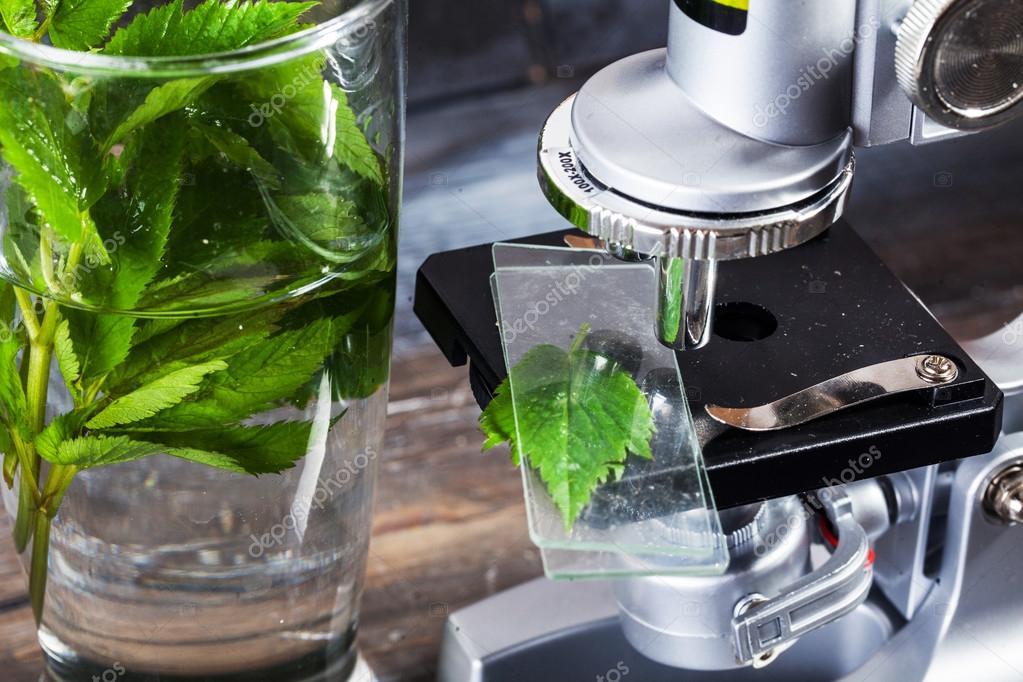Kinder mikroskop in stillleben tabelle blätter pflanzen laub