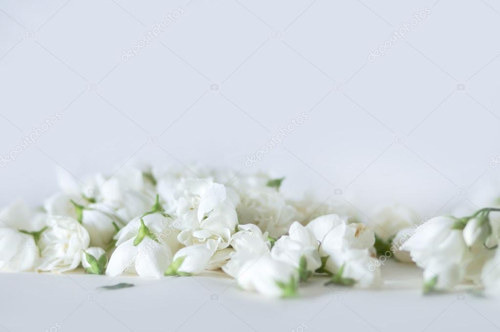 weiße blumen hintergrund — Stockfoto © HappyCity #112084910