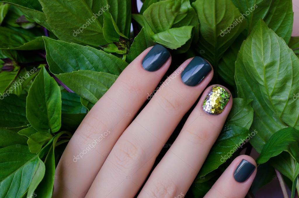 Albahaca en la mano femenina con hermosa manicura verde oscuro ...