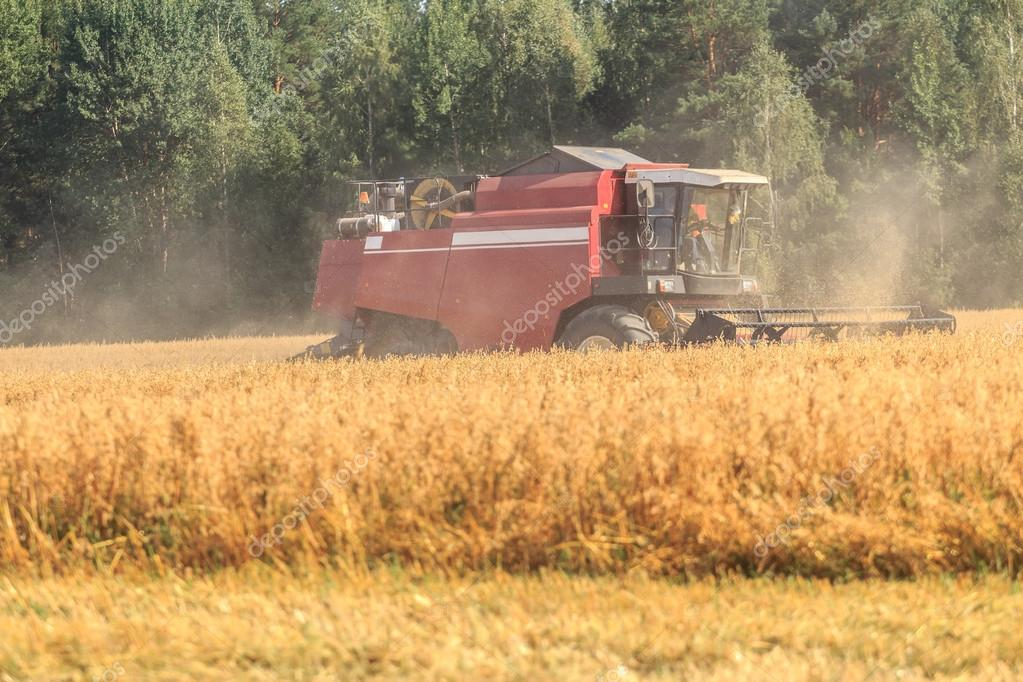 Combine machine harvester in field