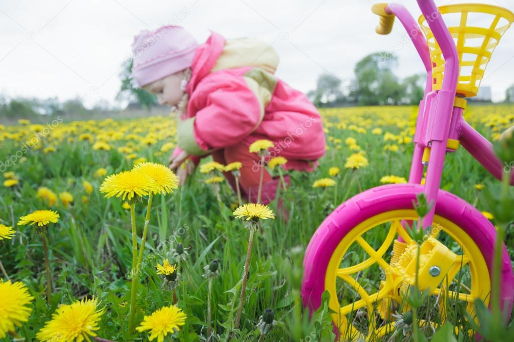 Magenta Color Kids Tricycle With Yellow Wheels And Little Toddler Girl Collecting Dandelion Flowers At Spring