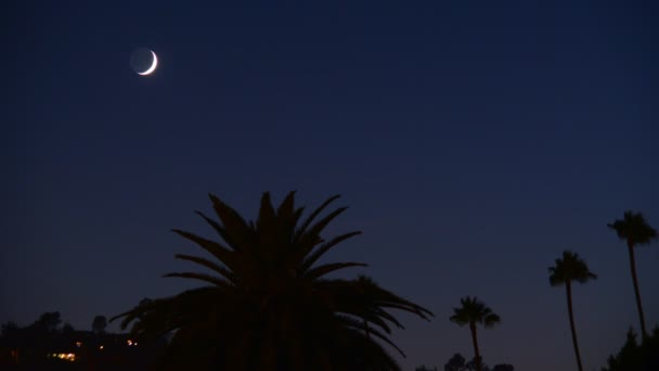 Crescent Moon Setting over Palm Trees