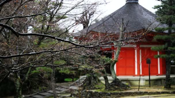 Dešťová kapka na větev stromu  červené Pagoda