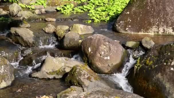 Waterfalls in Japanese Botanical Garden