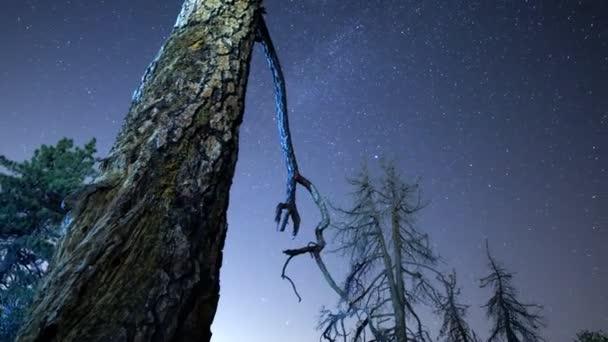 Starry Sky over Alpine Trees