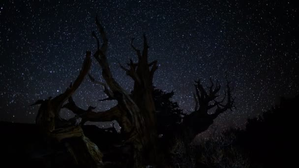 Tejútrendszerben ősi Bristlecon fenyőfák