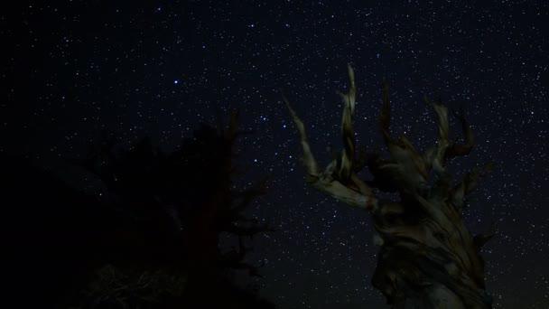Csillag síterep Sörösfa fenyőfák