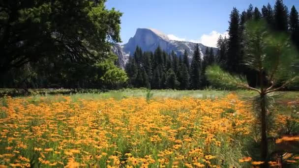 Half Dome nad květiny v Yosemite