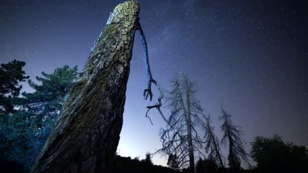 Csillagos ég át alpesi fák