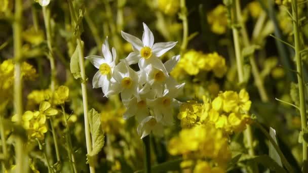 Šestihranný hvězdy bílé květy