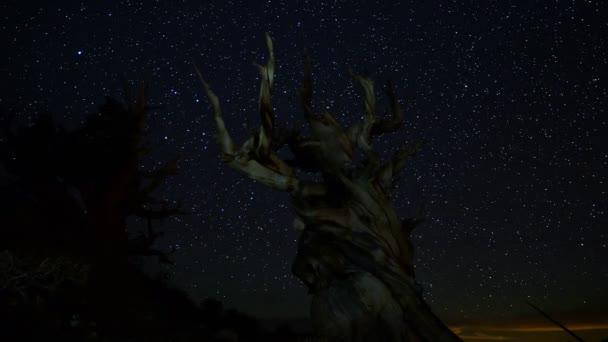 Csillagok több mint ókori Bristlecon Pine fa