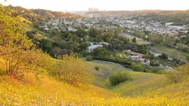 Wild Flowers on City Hilltop
