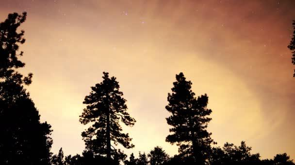 csillagok és vörös felhők felett erdő