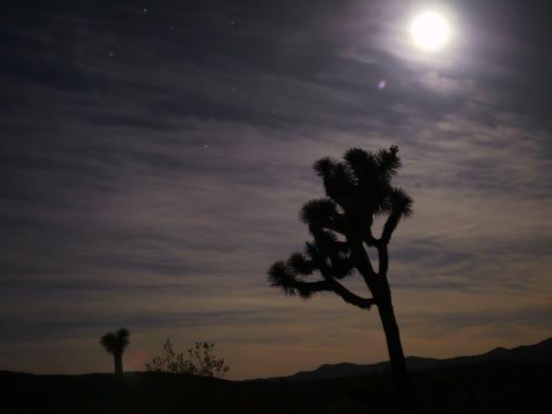 Joshua Tree with Full Moon Night to Day