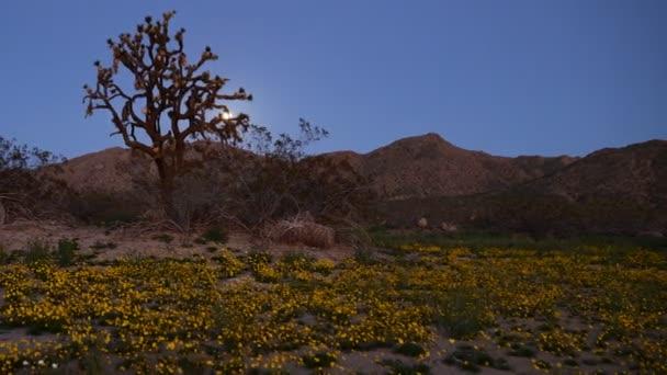 Měsíc nad pouští květinový koberec