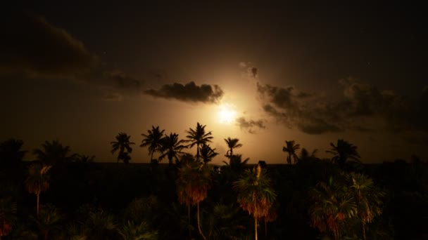 Tropical Moon Light Night Time