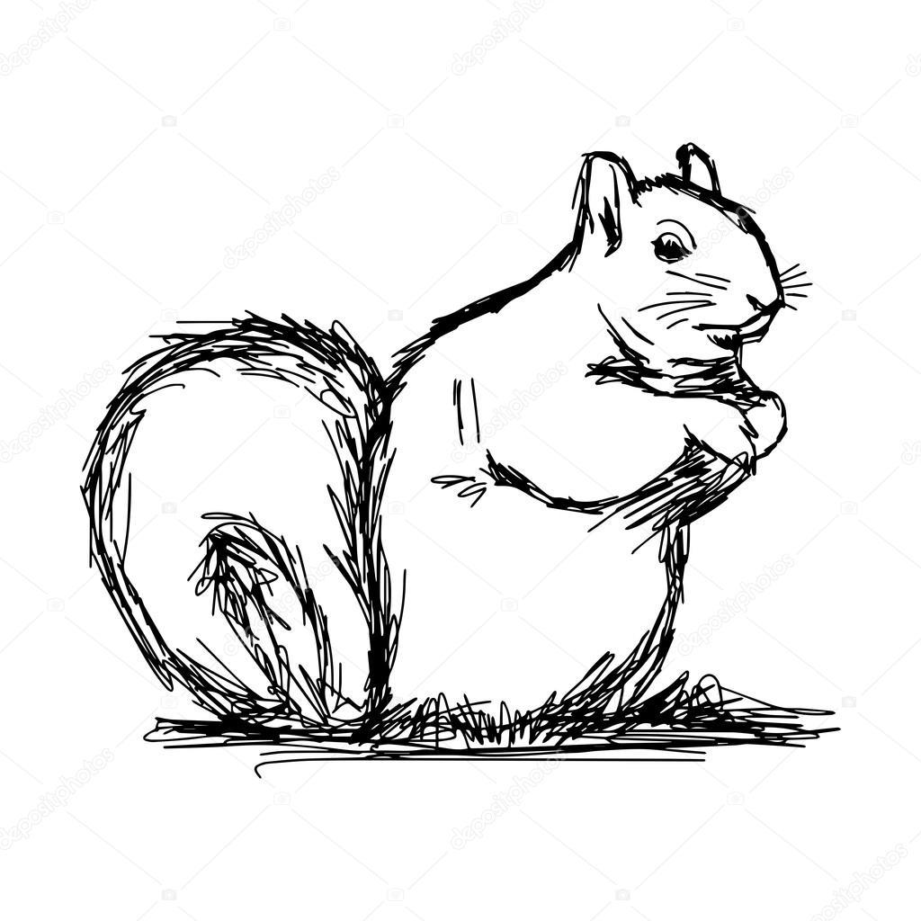 Abbildung Vektor Hand Zeichnen Kritzeleien Von Eichhörnchen Isoliert