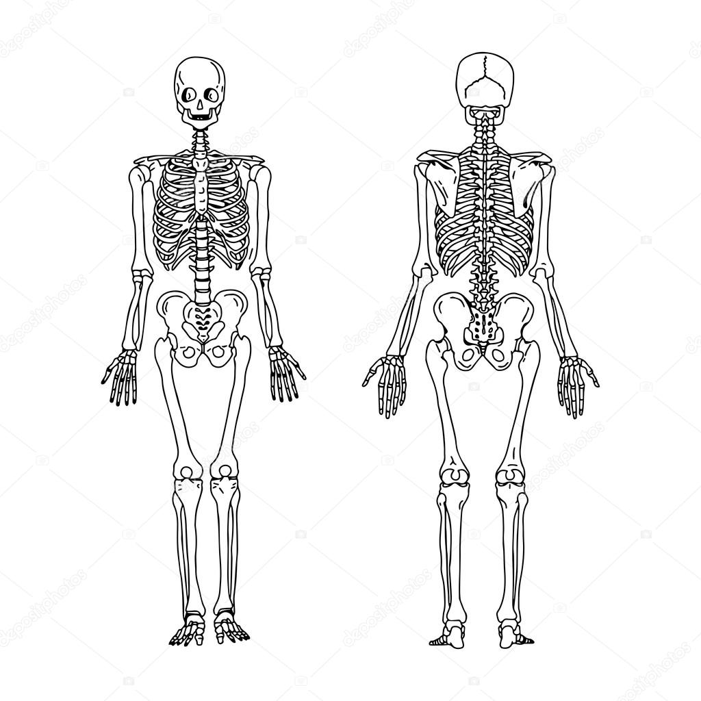 Ilustración vector mano dibujar garabatos del esqueleto humano desde ...