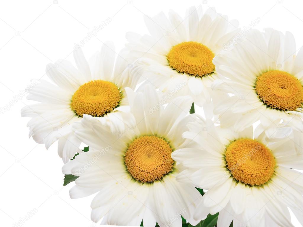 Chamomile flower bouquet