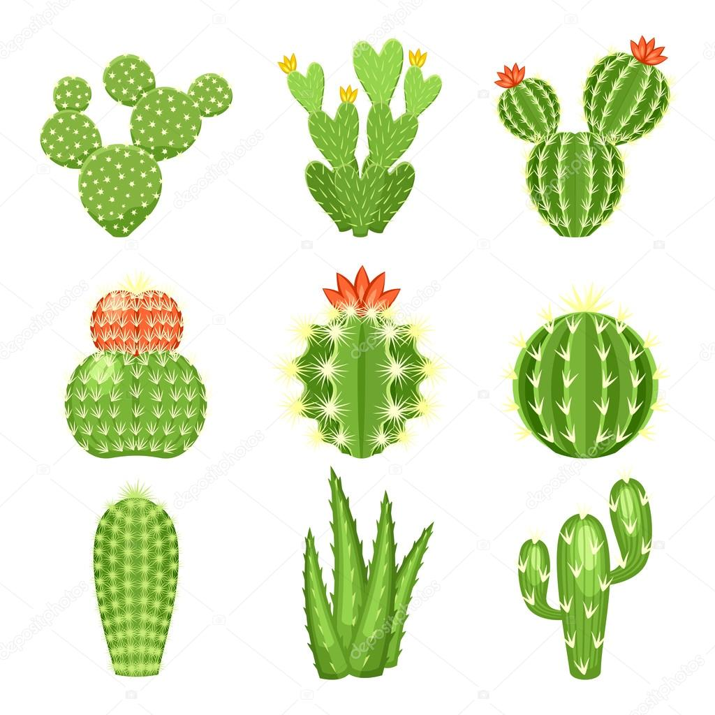 Vector icon set of colored cactus and succulent