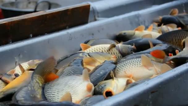 klasifikace ryb