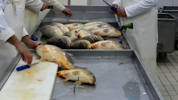 Čištění ryb kapr