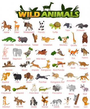 Wide variety of wild animals