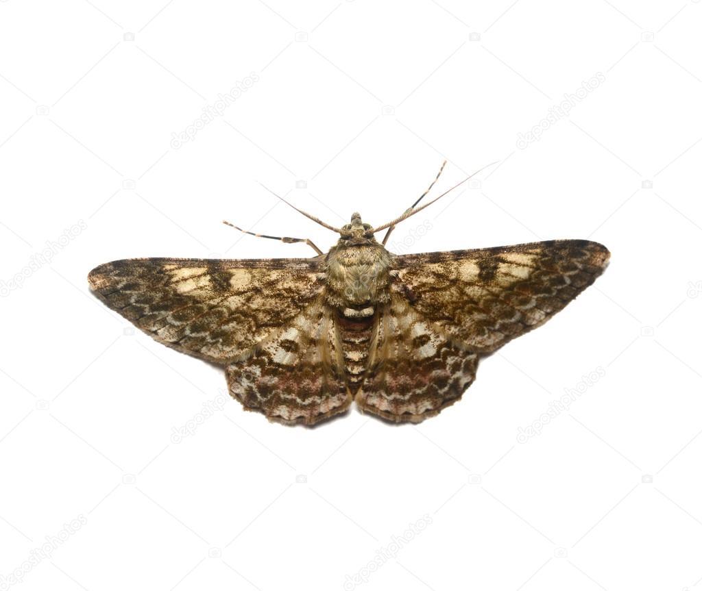 Motyl Motylek Stock Fotografie C Weradeposit 64266743