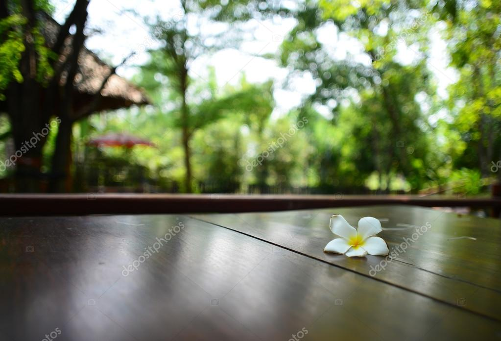 frangipani flower on table Background bokeh