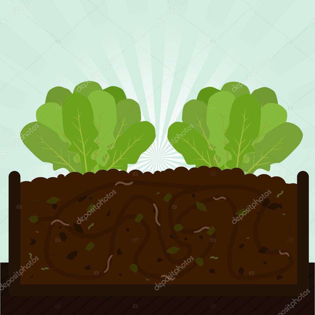 Arugula tree and compost