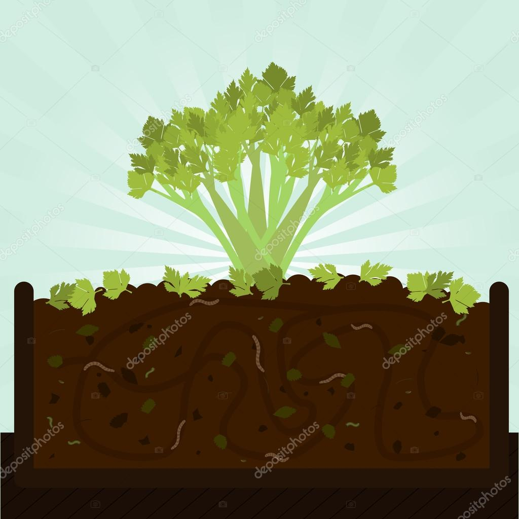 Stalk of celery and compost