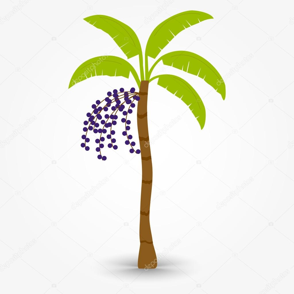 Acai Tree Stock Vector C Drical 81622198