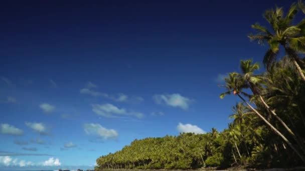 Tilt down of a beautiful tropical beach with white sand, palm trees and stones