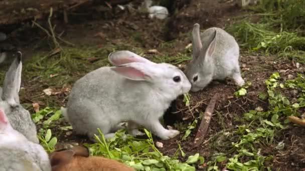 Niedliche kleine Kaninchen fressen Gras