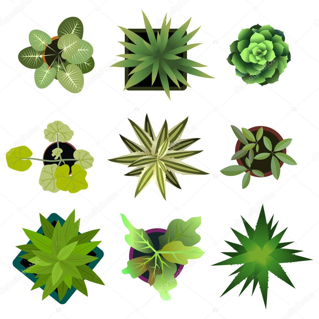 Top view. plants Easy copy paste in your landscape design projects ... for Plant Top View Vector  45ifm
