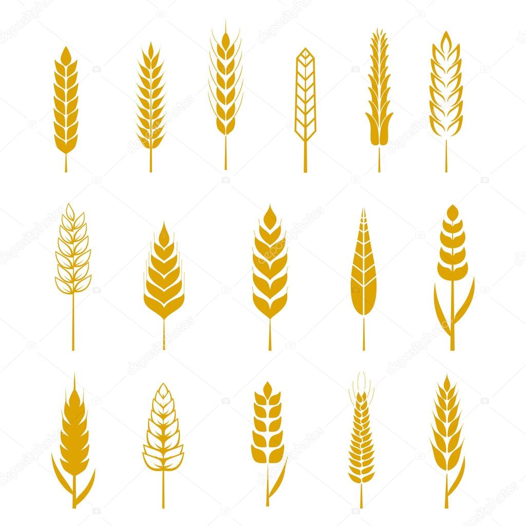 Set of simple wheat ears icons and design elements for beer, organic local farm fresh food, bakery themed design, wheat grain. Wheat vector