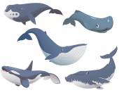 Fotografie Big set cartoon whales