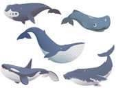 Big set cartoon whales