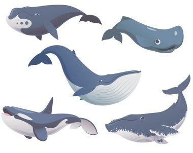 Big set cartoon whales