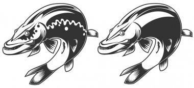 Brutal pike fish
