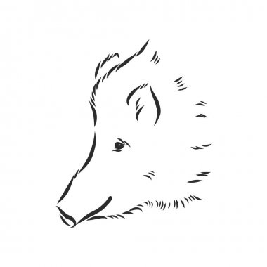 Sketch grunge wild boar in the profile.Stock vector illustration. icon