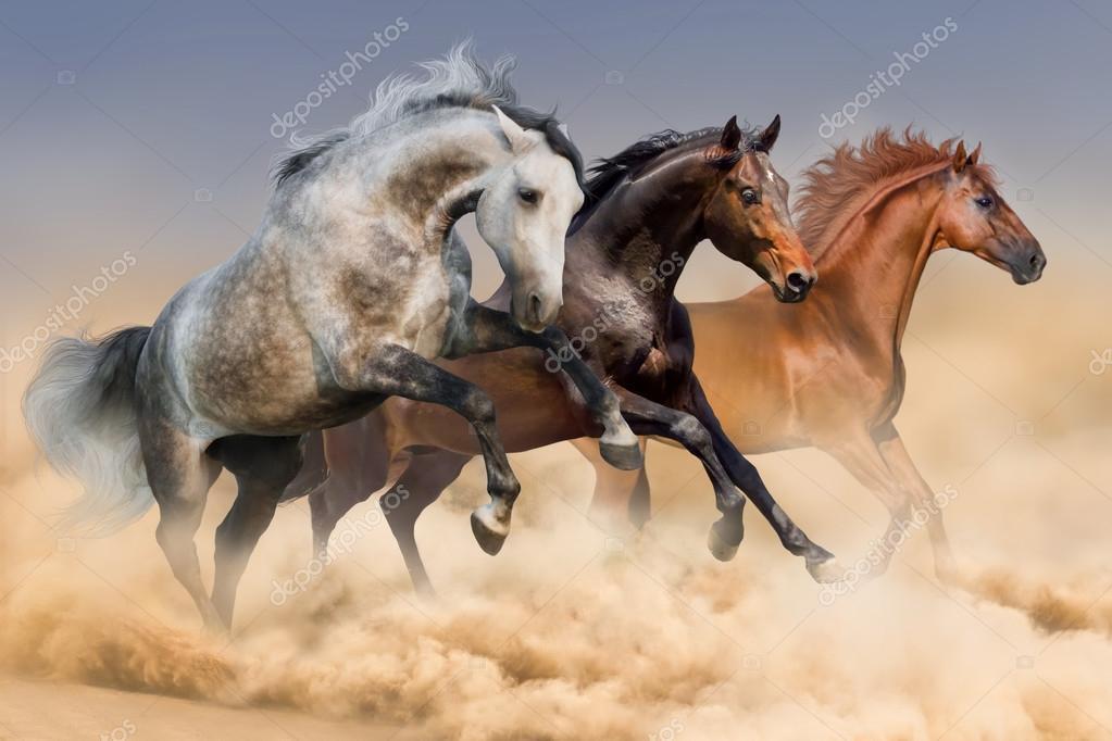 Black Desert Pferderennen