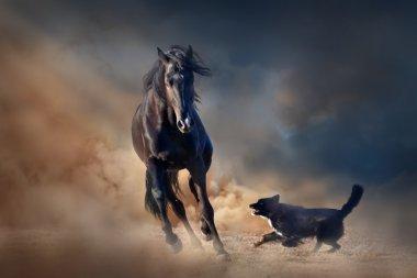 Black stallion horse with dog