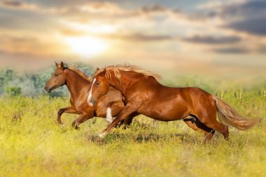 Two red horse