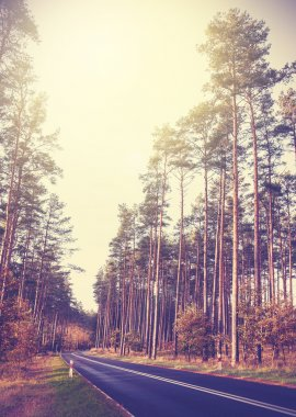 Vintage retro styled picture of a road in forest.