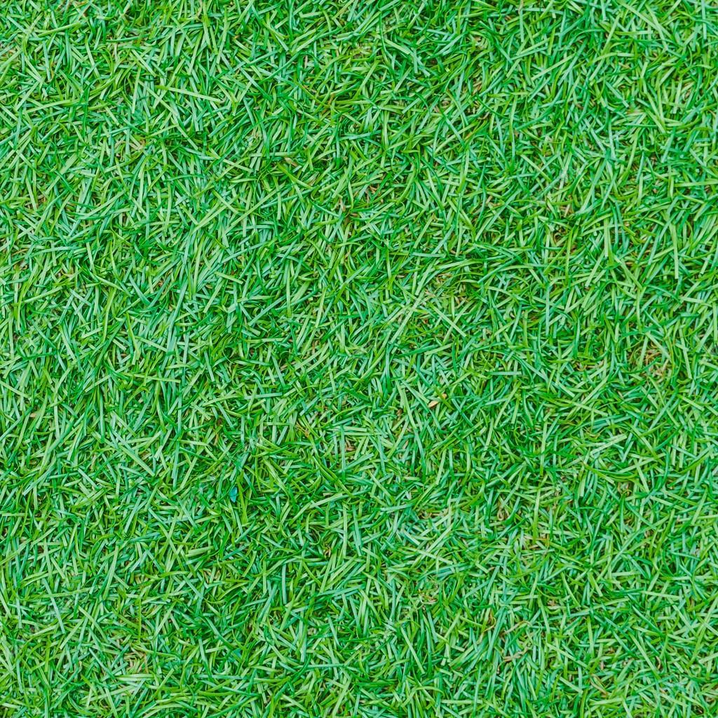 Seamless green grass texture from golf course — Stock ...